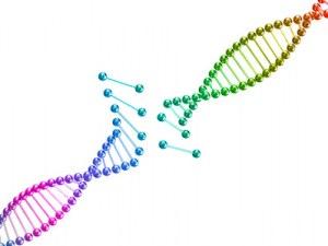 Custom service : Gene synthesis