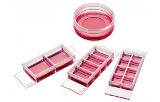 Culture supports for microscopy