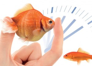 FlexISH new technology: FISH protocol in 2 hours