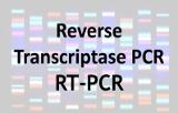 Reverse transcriptase PCR - RT-PCR