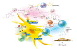Tetramers and monomers