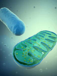 Metabolic signaling pathways