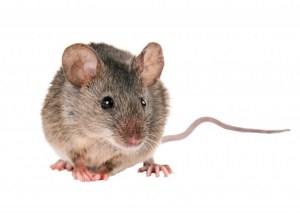 PureStain Mouse-on-Mouse Kits for IHC