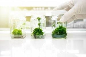Mezzi e recipienti di alta qualità per la coltivazione delle piante