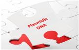 Plasmidic DNA