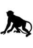 Tétramères - Macaque Rhésus