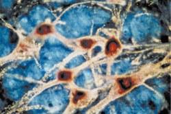 Protocole pour la cytométrie en flux sur tissus