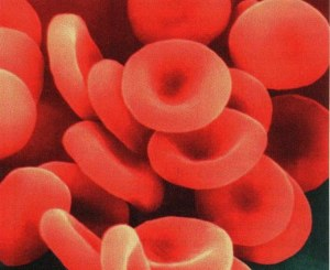 Protocol for flow cytometry on whole blood