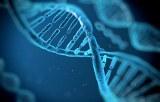 ADN/ARN