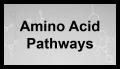 Voies des acides aminés