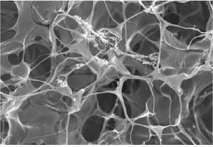 Support de culture 3D pour les cellules cancéreuses