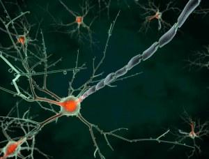 23e réunion du réseau LARC-Neuroscience
