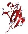Protéines et anticorps associés à la signalisation inflammatoire