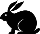 Rabbit Monoclonal Anti-Human OLIG2 [Clone EP112] - Concentrate
