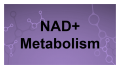 Métabolisme de NAD+