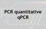 PCR quantitative - qPCR