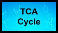 Cycle de l'acide tricarboxylique