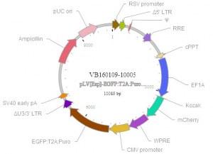 Construction de vecteurs viraux